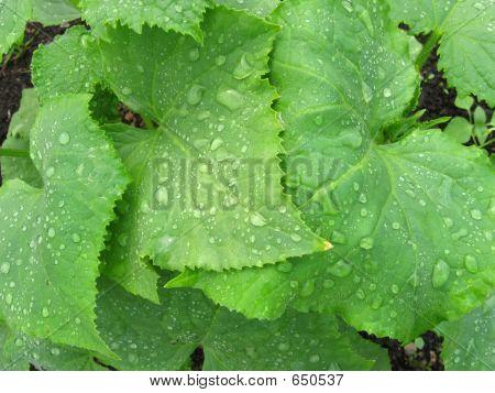 Foliage After A Rain