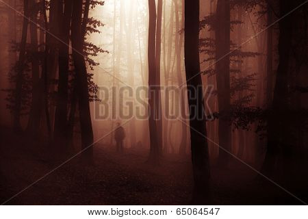 Haunted forest with ghost shadow on Halloween