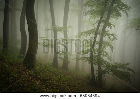 Ethereal forest with fog and green trees