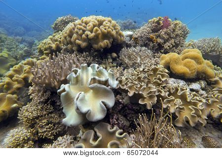 Underwater hard and soft coral garden in Moalboal, Philippines