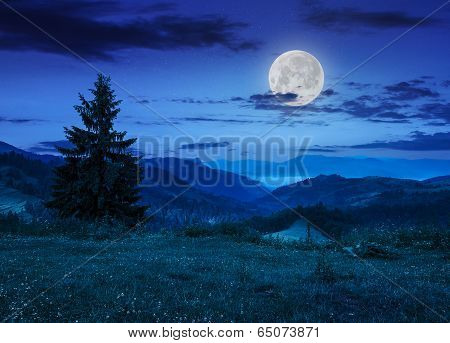 Pine Tree On Hillside Under Cloudy Sky At Night