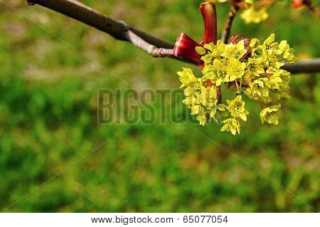 Bunch Of Blossoming Yellow Flowers