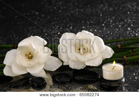 spa concept gardenia flower with candle and bamboo grove