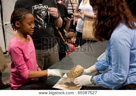 Girl Grimaces Touching Human Brain At Science Expo