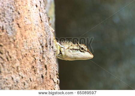 lizard skin stick on the tree