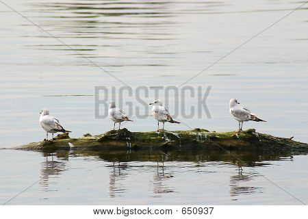 Birds On Log