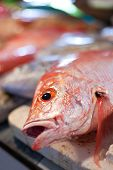 foto of red snapper  - Lapu-lapu red snapper and tuna seafood on asian market
