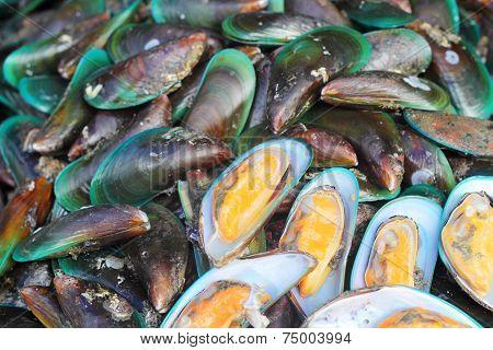 Fresh Shellfish At The Market