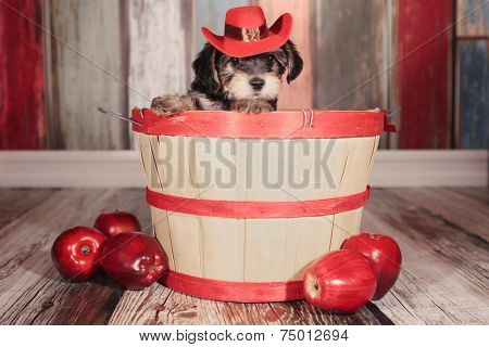 Teacup Yorkie Puppy in Adorable Backdrops and Prop for Calendar or Cards