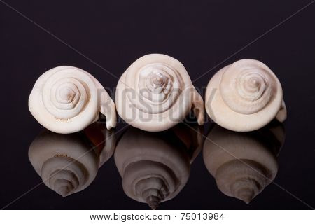 some seashells on black background with reflection