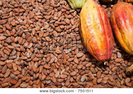 Cocoa Beans and Fruit