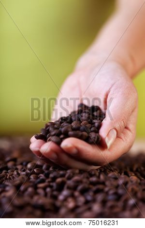 Evaluating The Coffee Crop