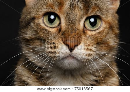 close-up battle-seasoned cat