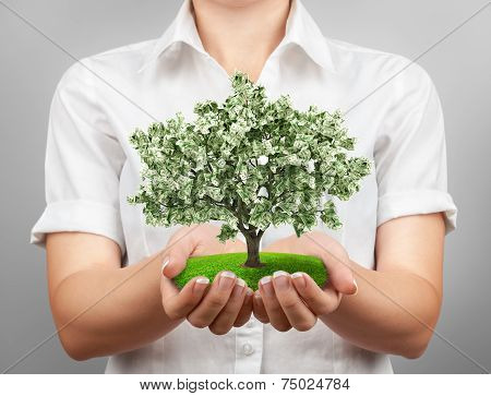 Female hands holding a money tree