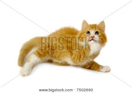 Afraid Kitten