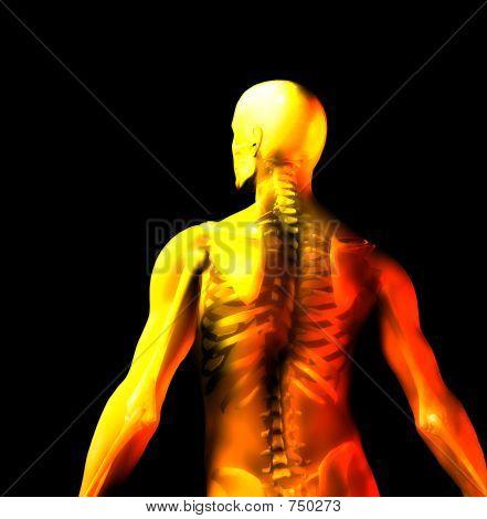 Man Bone 6