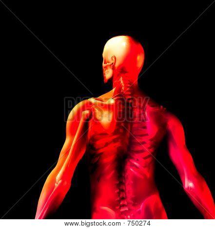 Man Knochen 7