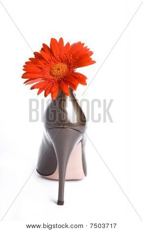 Shoes  And A Bright Flower