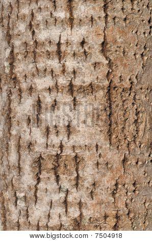 alte aspen Rinde Textur