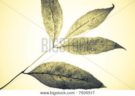 Mystical Leaves