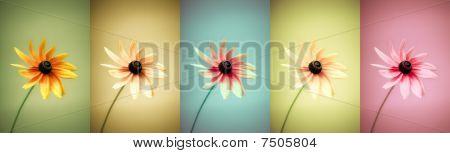 Flowers Variation