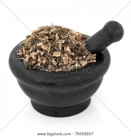 Chinese motherwort herb used in herbal medicine in a marble mortar with pestle over white background. Yi mu cao.