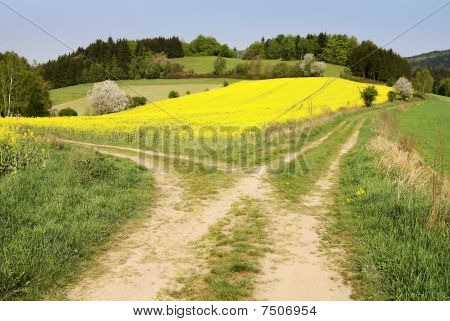 view on field path and yellow rape field