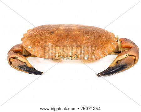 Bolied Orange Color Crab  With Claws Isolated On White Background