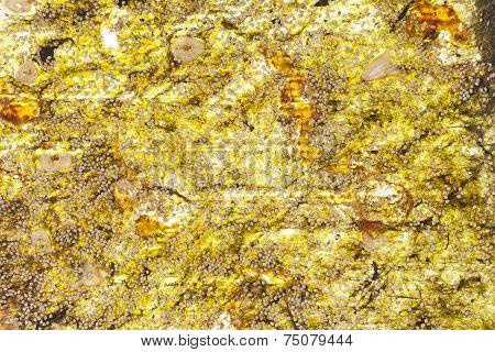 Seaweed Background.