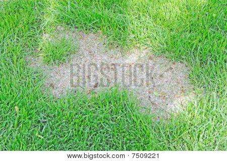 lawn spot
