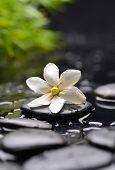 foto of gardenia  - Still life with white gardenia with black stones and green plant  - JPG