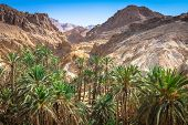 picture of tozeur  - Mountain oasis Chebika at border of Sahara Tunisia Africa