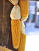 pic of aborigines  - The cluster of corn hanging to dry in a aboriginal village - JPG