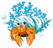 picture of hermit  - illustration of a close up hermit crab - JPG