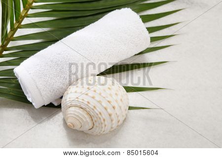 towel and sea shell side by side