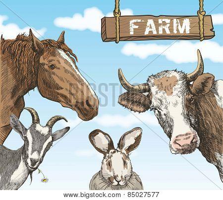 rural animals