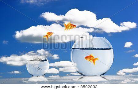 Goldfische und Aquarium