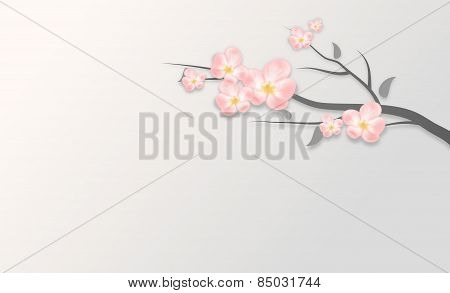 Pink Blossom Background