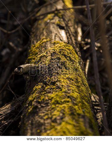 Dead Mossy Tree