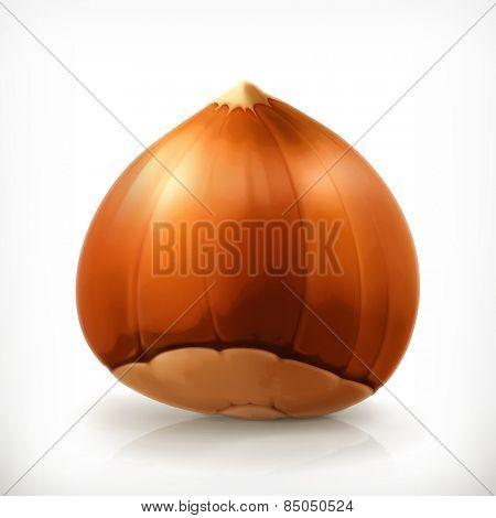 Hazelnut, vector icon