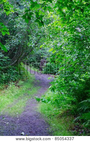 Rough Path In Woods