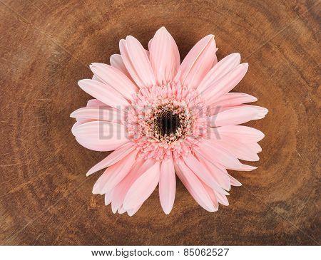 Pink Flower On Wood