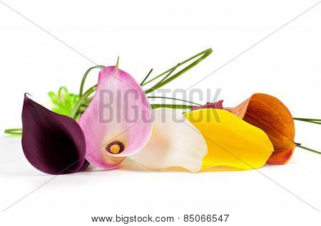Bouquet Of Multicolored Calla Lily