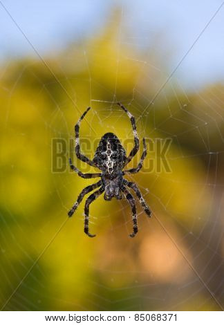 Macro of spider on his net with blurred background