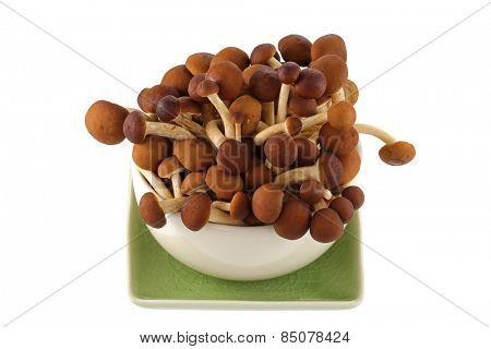 A bowl of fresh Yanagi mutsutake Mushroom isolated on white