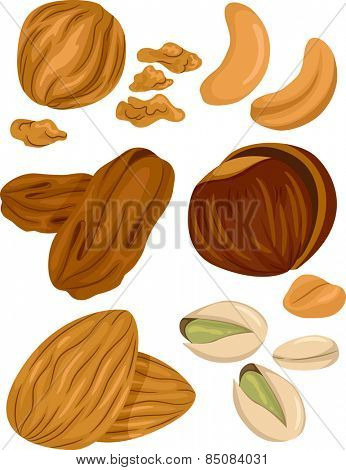 Illustration of Different Types of Nuts With a Few Cracked Open