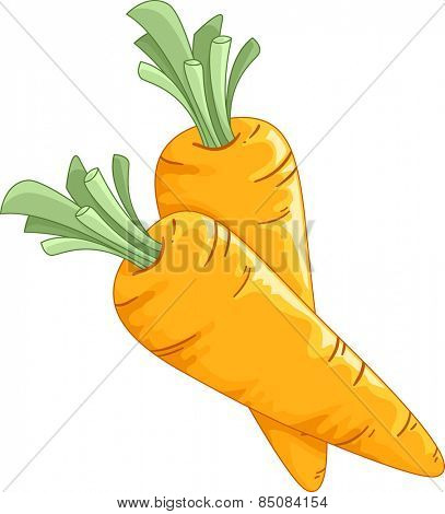 Illustration of a Pair of Freshly Picked Carrots