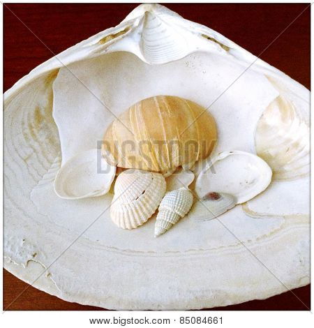 Instagram style image of a seashell collection on wood background