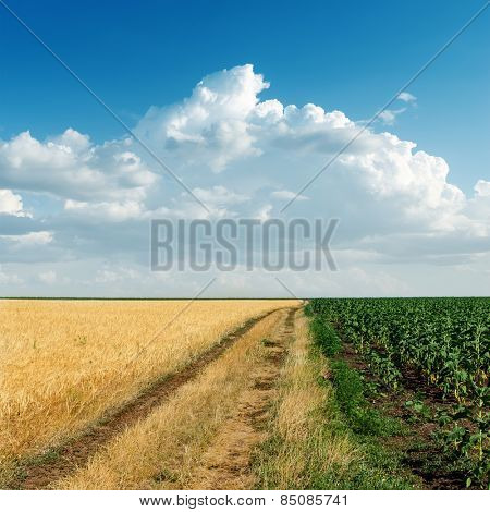 two agricultural fields and cloudy sky