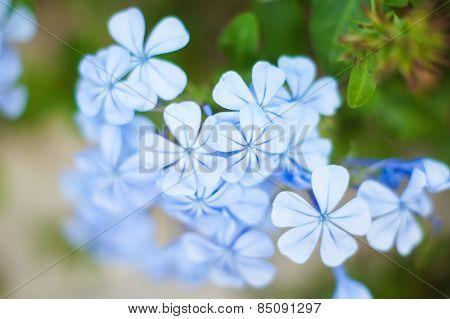 Leadworth Flower